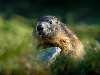 Groundhog Removal at Virginia Professional Wildlife Removal Services, LLC