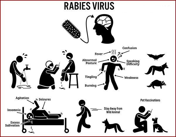 VPWRS can help prevent the rabies virus.