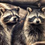raccoon removal fluvanna va