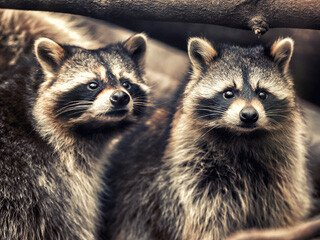 Raccoon Removal at Virginia Professional Wildlife Removal Services, LLC