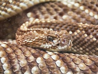 Snake Removal at Virginia Professional Wildlife Removal Services, LLC