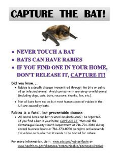 what to do if you have a bat inside your home