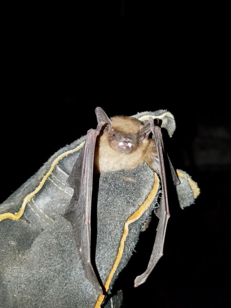 bat in my house