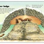 beavers - beaver lodge