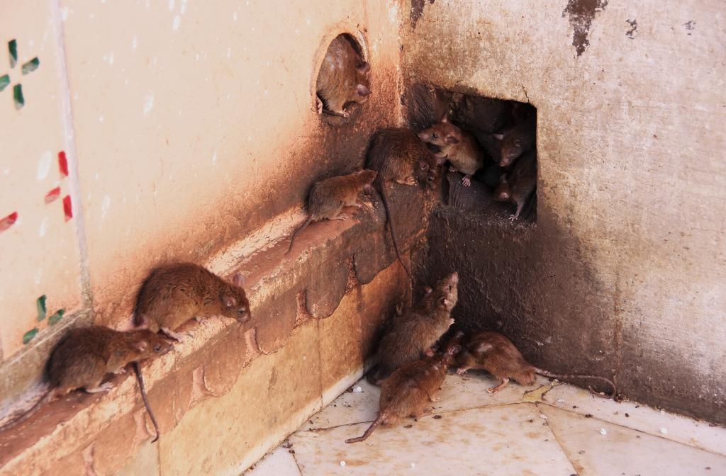 rat entrypoint