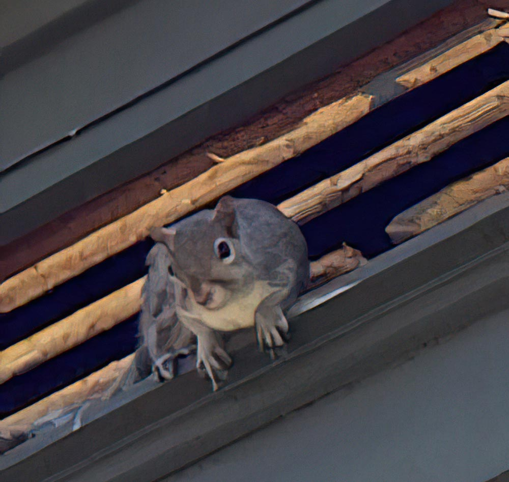This Grey Squirrel Chewed It's Way Through This Vent And Got Into The Attic. Virginia Professional Wildlife Removal Services, LLC. team will repair your vent and make sure this does not happen again.